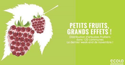 Distribution de petits fruitiers
